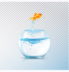 boiling fish aquarium composition vector image