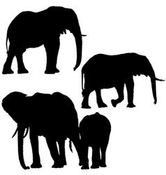 Elephant Silhouettes vector image