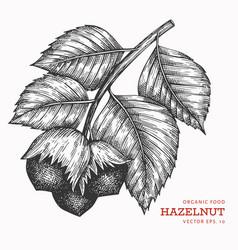 Hand drawn sketch hazelnut branch organic food vector