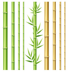 Realistic 3d detailed bamboo shoots set vector