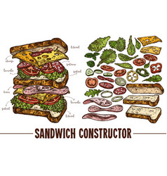 Sketch sandwich with food ingredients vector