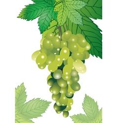 Vineyard vector