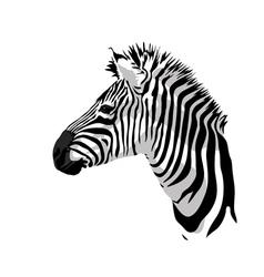 Zebras portrait vector image vector image