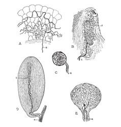 Peripheral nerve beginnings vintage vector
