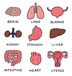 Set internal organ cartoon vector