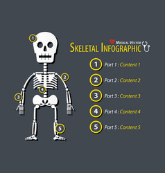 skeletal infographic flat design vector image
