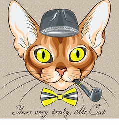 cartoon hipster cat Abyssinian vector image vector image
