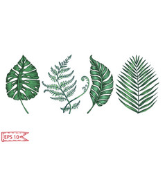 card with palm leaves for vector image