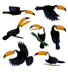 Set tropical toucan birds vector