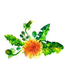 flowers dandelions watercolor vector image vector image