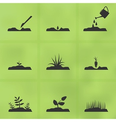Grow a plant vector image