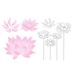 Lotus flowers and petals vector