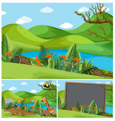 Mountain scenes with many animals vector