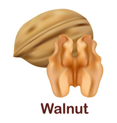 walnut icon realistic style vector image