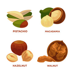 nut set ripe nuts and seeds vector image vector image