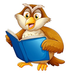 owl reading vector image vector image