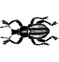 Beetle eupholus cuvieri vector