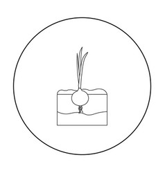 Onion icon outline single plant icon from the big vector