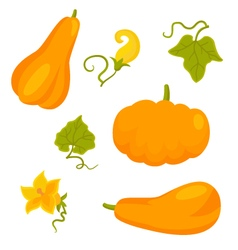 Set of pumpkins and flowers isolated on white vector image vector image