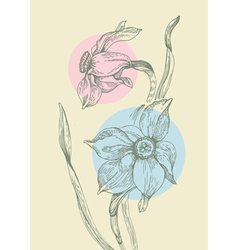 floral background with narcissus vector image vector image