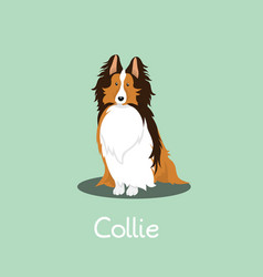 an depicting a cute collie dog vector image vector image