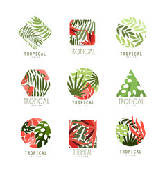 set of geometric tropical logo with leaves and vector image vector image