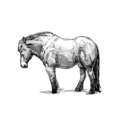 draught horse vector image