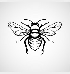 engraving honey bee on white background vector image