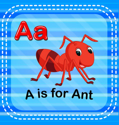 flashcard letter a is for ant vector image