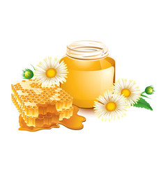 honey and honeycomb vector image