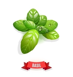Leaves of Genovese basil Thai basil lemon basil vector image