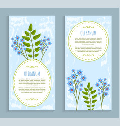 Olibanum cards collection vector