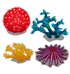 set colorful corals isolated on white vector image