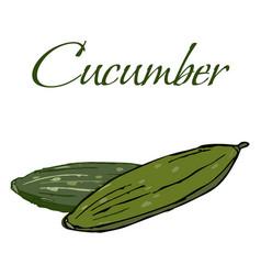 tasty veggies cucumber vector image