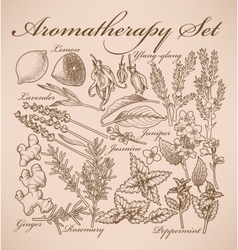 Aromatherapy set vector