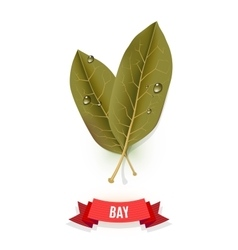 Leaves of California bay Indian bay Indonesian vector