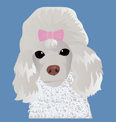 Poodle close up vector