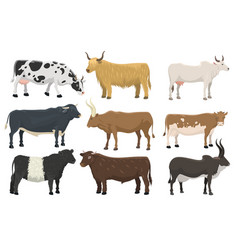 Set bulls and cows farm animal cattle mammal vector