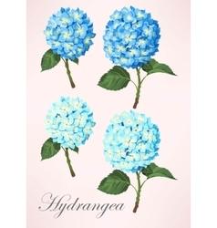 Set hydrangea flowers vector