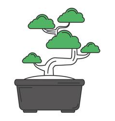 bonsai tree isolated icon vector image
