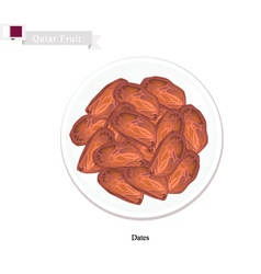 Dried Dates are Popular Fruit in Qatar vector image