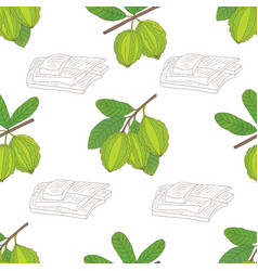 Graphic seamless pattern with terminalia vector