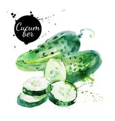 Green cucumber Hand drawn watercolor painting vector