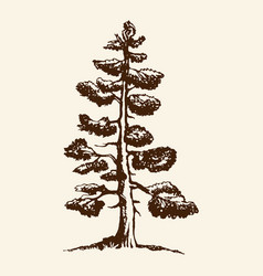 hand-drawn sketch a pine tree the vector image