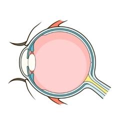 Human eye structure scheme vector