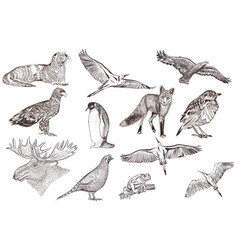 set of detailed hand drawn animals vector image