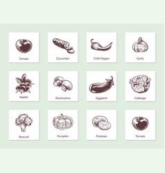 vegetables slide set templates for label design vector image