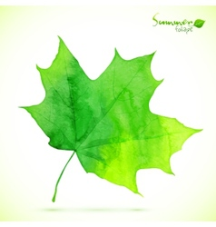 Watercolor green maple leaf vector image