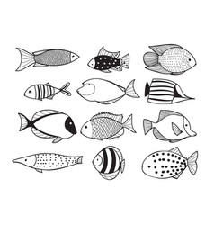 fish collection vector image vector image