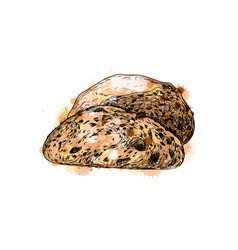 bread from a splash watercolor hand drawn vector image